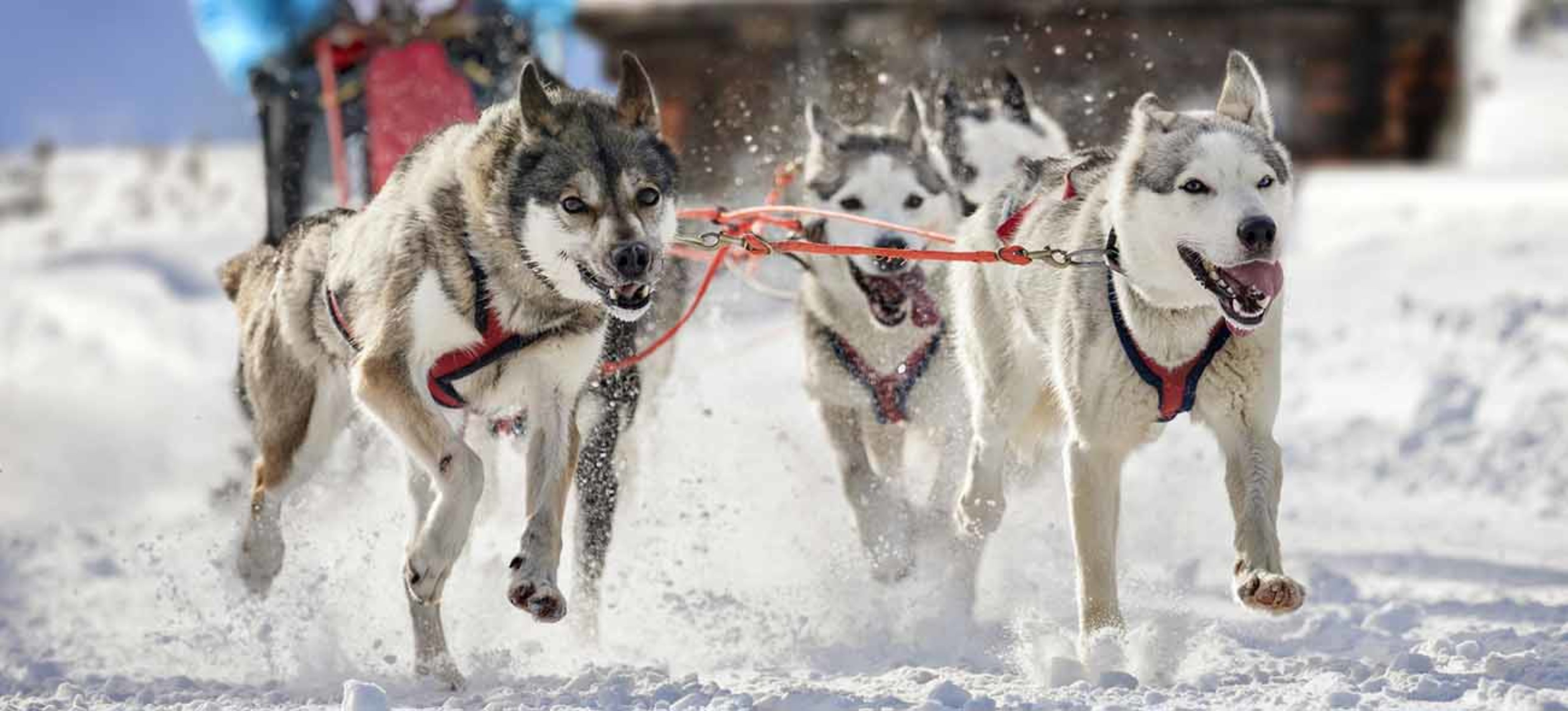 Dog Sledding Snowmass Mountain
